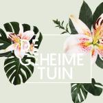 6x festivals in augustus: verstopte tuinen, speciaalbiertjes en romantisch doen