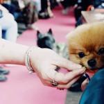 Nooit meer werken, Rotterdam als internationale filmset en de schattigste honden
